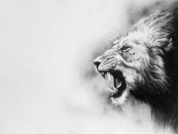 Black and white Lion print charcoal print Big cat drawing | Etsy