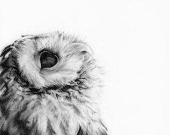 Archie I-Print-Owl Print-Animal print-Woodland Art-Black and white print-Nocturnal animal print-minimalist-Spotted Owl-Home Decor-Wall art.