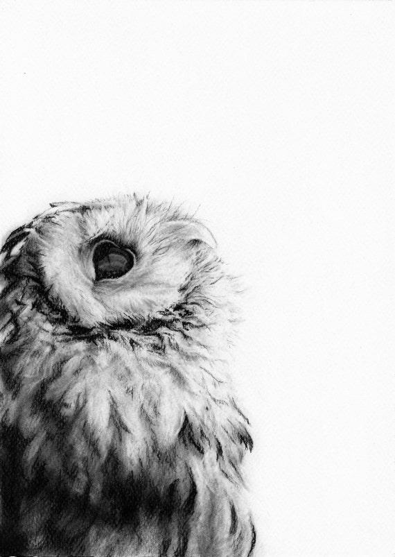 Gufo Bianco E Nero Disegno Animale Stampa Ritratti Di Etsy