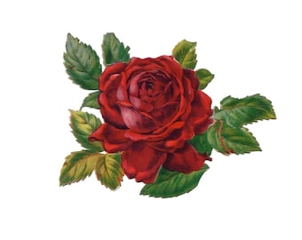 """Vintage Rose Temporary Tattoo - """"Roses are Red"""""""