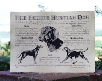 Antique styled dog standard - Polish Hunting Dog