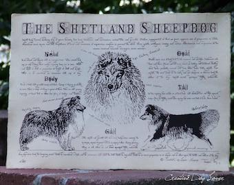 Antique styled dog standard - Shetland sheepdog