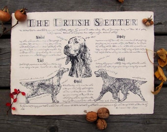 Antique styled dog standard - Irish setter