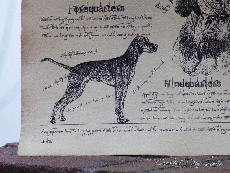 Antique styled dog standard Hungarian Short-haired Vizsla