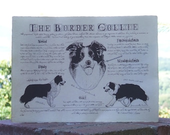 Antique styled dog standard - Border Collie