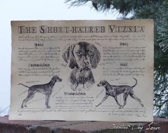 Antique styled dog standard - Hungarian Short-haired Vizsla