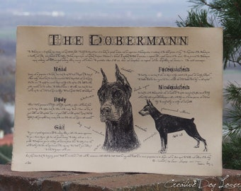 Antique styled dog standard - Dobermann