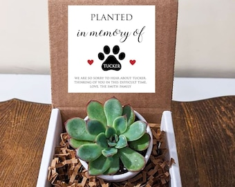 Pet Memorial Succulent with Personalized Message. Loss of Dog. Personalize text and colors. Includes white pot.