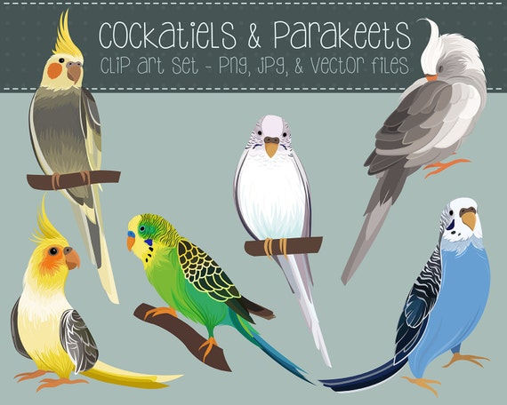 Cockatiels and Parakeets Clip Art - Set of 6 Hand Drawn PNG, JPG, and Vector Files - Cute Birds Digital Download Clipart