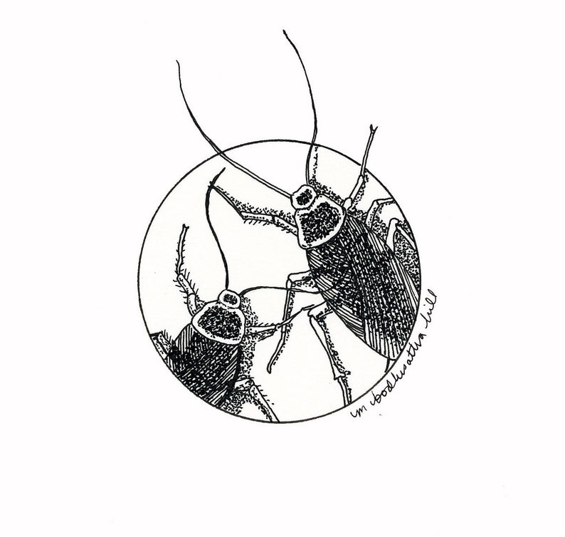 Cockroaches  Original Pen and Ink Drawing  Free Shipping image 0