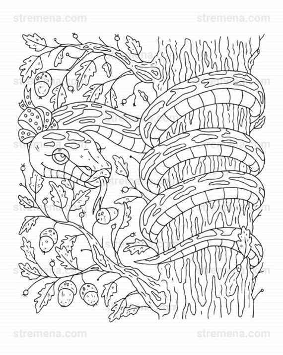 Reptiles Printable Coloring Pages: Snake And Lizard Etsy