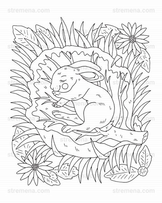 Cute Little Woodland Animals Printable Coloring Pages PDF Etsy