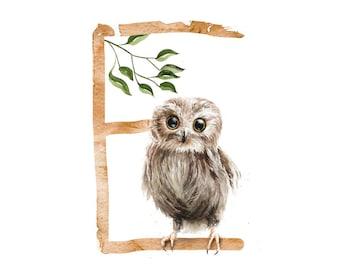 ABC Card E for Owl, Letters ABC, ABC Cards