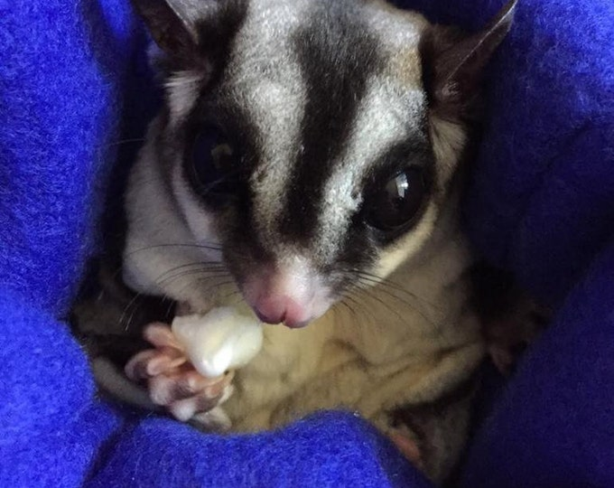 Featured listing image: Sugar Glider Nail Trimming Kit
