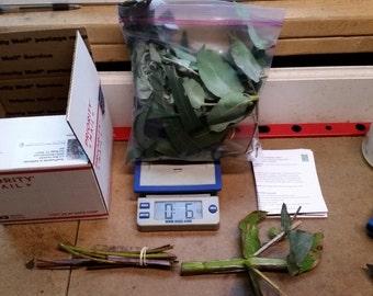 Starter Pack- Organic Eucalyptus Branch, Fresh Leaves and Chew Sticks