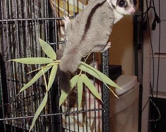 1/2 pound Fresh Eucalyptus Leaves, Organic Eucalyptus Sugar Bear toy, Pocket Pet toy, Bird toy, small animal toy, exotic animal toy