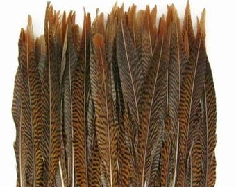 Online Feathers