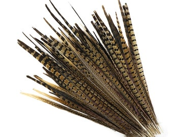 """ENGLISH RINGNECK Natural Pheasant Tail Feathers 10-26"""" in Various Sizes"""