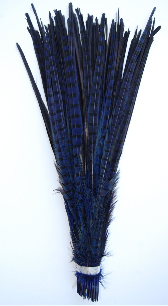"25 Pcs ENGLISH RINGNECK PHEASANT Natural Feathers 22/""-24/"" Halloween//Hats//Costume"