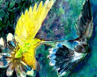Hummingbirds Jousting