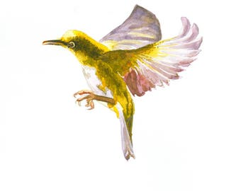 Hummingbird, Japanese White Eye Last in Series of Three