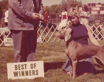 Best of Winners, Best of Show, Best of Opposites, Vintage Photograph, Color Photo, Lake Villa, Illinois, Photo of Dog Show, Contest, Award