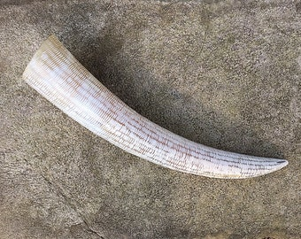 Viking Drinking Horn, Large Buffalo Horn