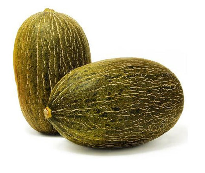 Santa Claus Melon 20 Seeds Piel De Sapo Toad Skin Melon