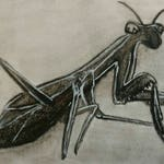 Praying Mantis Original Illustration Insect ACEO Outsider Folk Art Collectible Trading Card Mixed Media Strange Drawing Creepy Weird Stuff