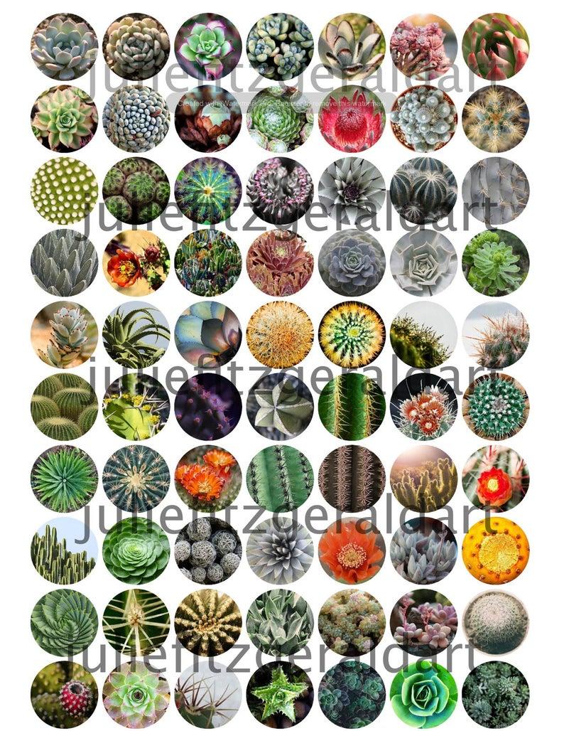 Cactus 70 Images Digital Collage Sheet Succulents Flowers image 0