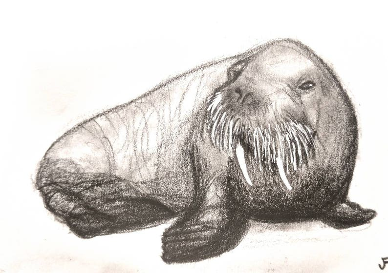 Walrus Art Original Illustration ACEO Gifts For Animal Lovers image 0