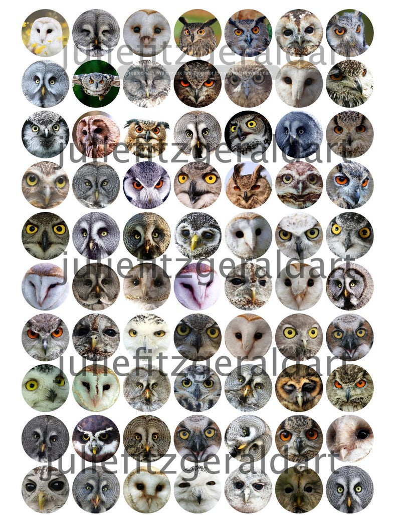 Owl 70 Images Digital Collage Sheet Owls Bird Art 1 Inch image 0