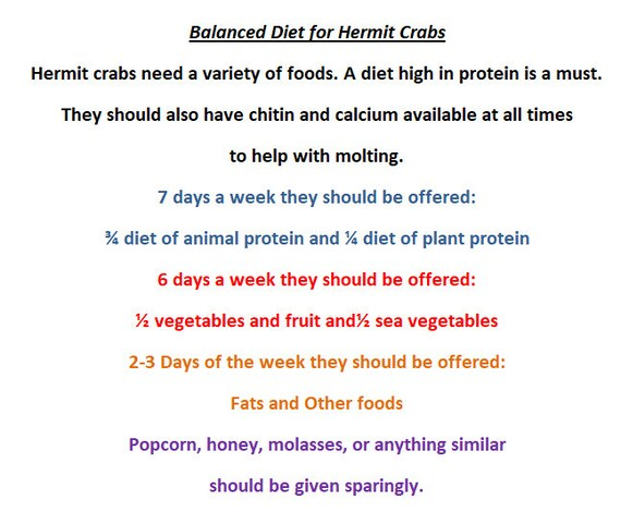 Organic Chamomile Flowers - Hermit Crab Food