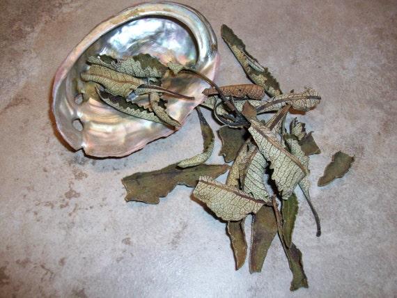 Abalone Shell and Yerba Santa Smudge Kit