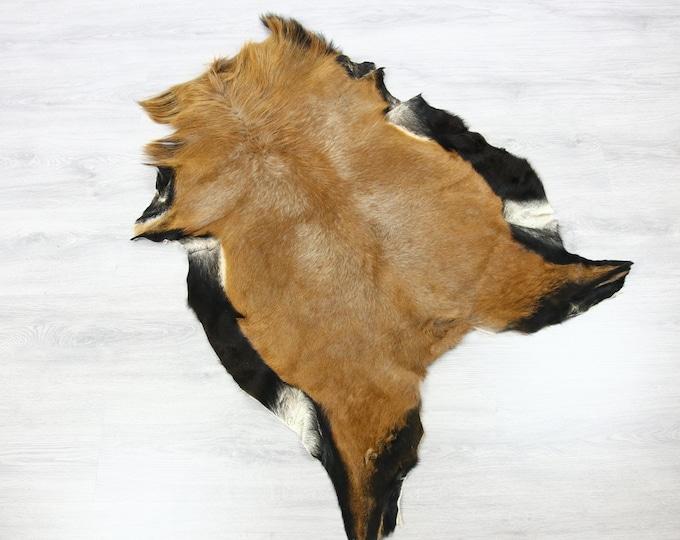 Kamerun sheep Hide | Kamerun Hide | Kamerun sheepskin  | Throw L  Large - Scandinavian Style | Home Decor | #SAR11