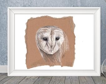 White owl, original pen & ink drawing on cardboard by Allison Muldoon/ChuckandStan