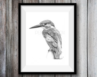 Kingfisher Art Print -  Hand Drawn Animal Illustration Pencil Drawing A4 / A5 Sizes Giclee  Nature Wildlife Bird - Wall Art Nursery Picture