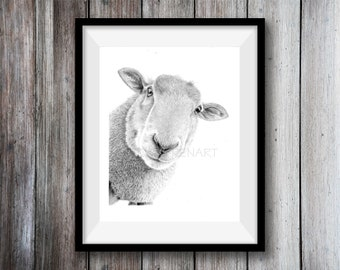Sheep Art Print -  Hand Drawn Animal Pencil Drawing A4 / A5 Sizes Giclee (UK Artist)  - Nature Wildlife - Wall Art Nursery Picture