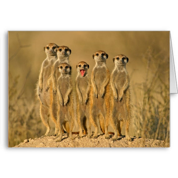 Meerkat Blank Card, Funny Animals, No Words, Send Positive Thoughts