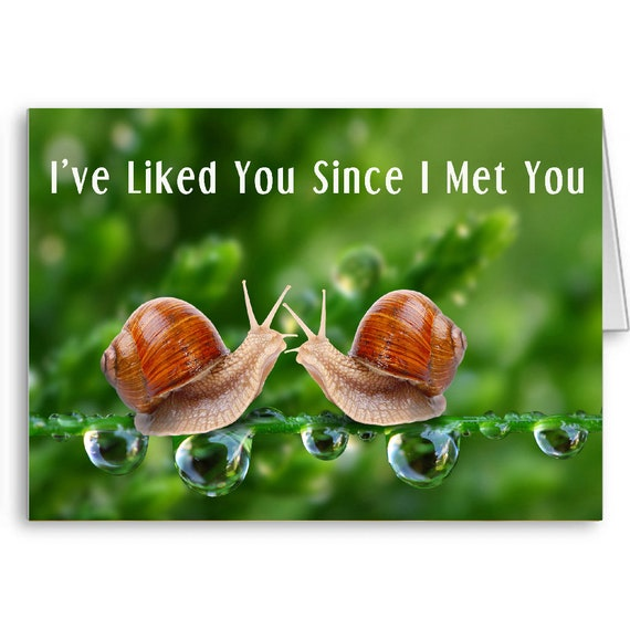 Friendship Card, Best Friends, Funny Anniversary, Birthday Card, Quote Card, I've liked you since I met you, Send Positive Thoughts