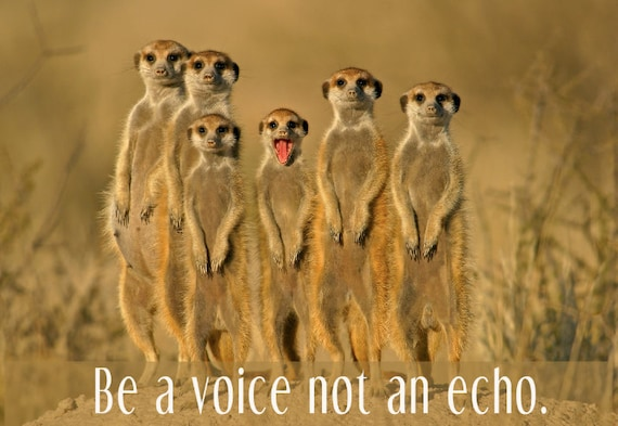 Encouragement Card, Inspirational Card,Cute Animal Card,Meerkats, For Girlfriend,For Boyfriend,Be a voice not an echo,Send Positive Thoughts