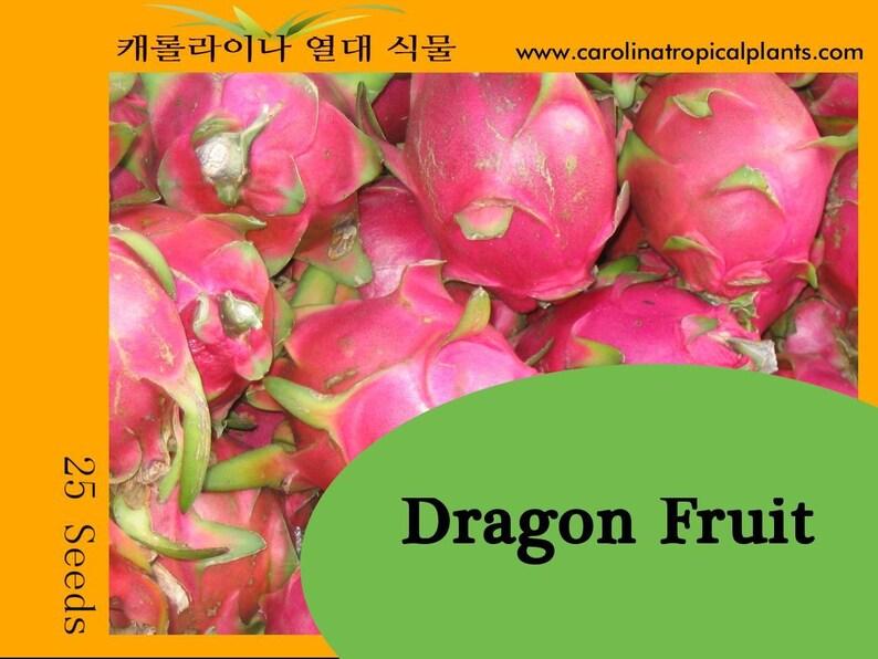 10 frische Samen Dracaena cochinchinensis The Thai Drachen Baum