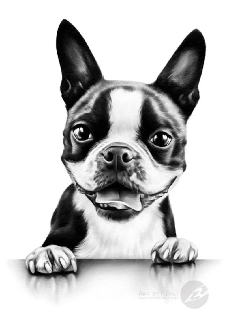 Art by Kerli Boston Terrier pencil drawing ORIGINAL