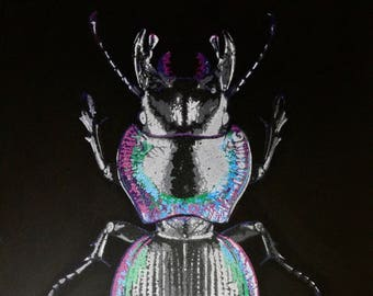 Mouhotia Planipennis