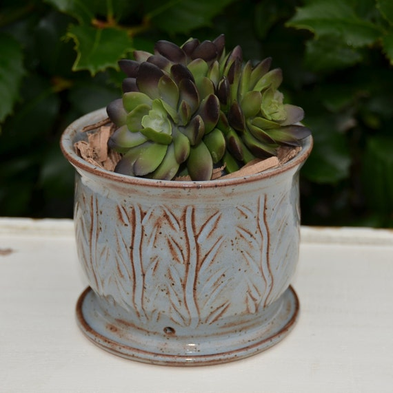Ready to ship...Beautiful handmade wheel thrown succulent cactus orchid pot (#C11)
