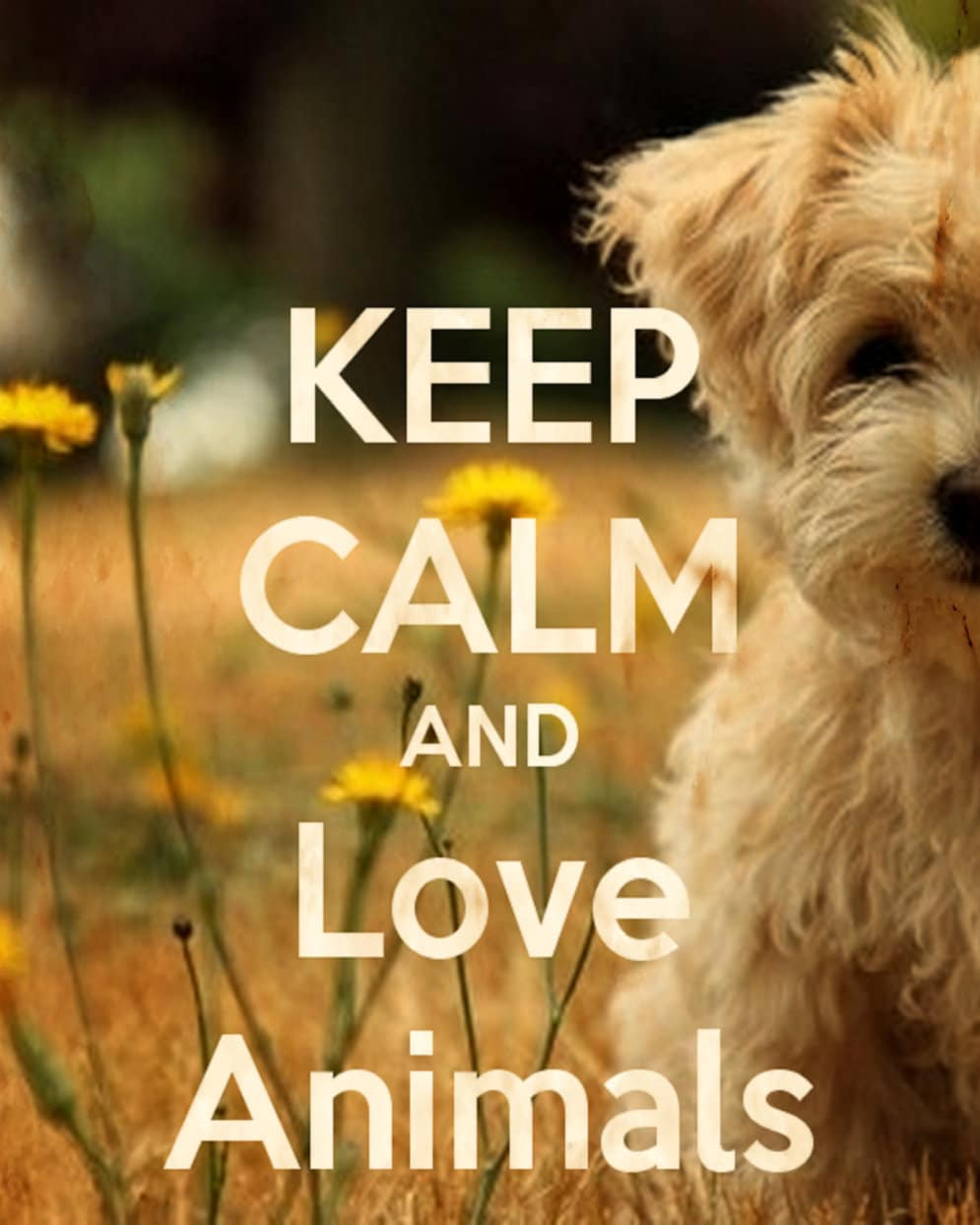 Keep Calm and Love Animals Print for Home or Office Wall Art | Etsy