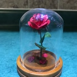 Beauty and the Beast Rose (mini)