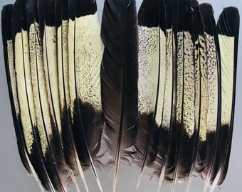 SALE Yellow-Tailed Black Cockatoo Made up SET Feathers- TRUSTED Approved Commercial Licence Holder -