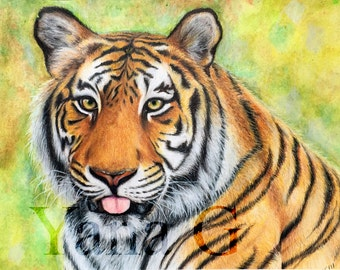 Tiger Drawing. Colored pencils drawing. Original tiger drawing.