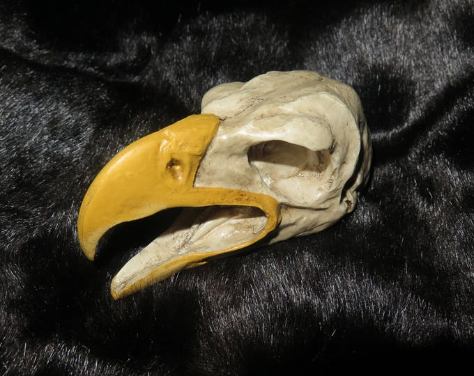 Golden Eagle Skull Eagle Skull one with a Open Mouth and one with a Closed Mouth